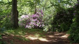 Bidston Woods in May & early June